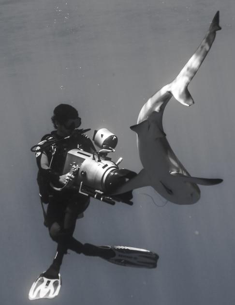 tournage requins