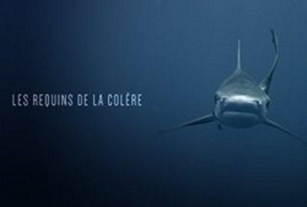 Les requins de la colère 90'